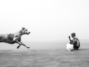 marine-drive-dogs