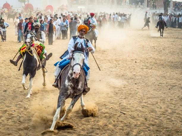Horse racing at Pushkar Mela