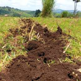 Turned soil on a farm in Uganda