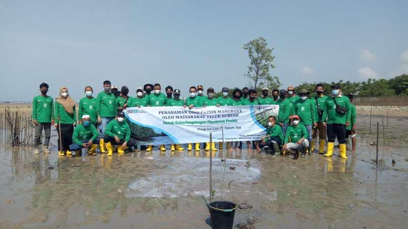 PT Timah Tbk menanam 2000 batang mangrove guna menghidupkan kembali kawasan Wisata Tanjung Pakdan, Kampung Teluk Rubiah, Kabupaten Bangka Barat. (Foto : Oma Kisma/Laspela)