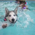 Abre el mejor hotel para mascotas con estos útiles consejos