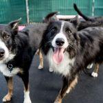 ¿Cómo abrir un centro de hospedaje para animales?