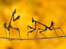 Autor: MEHMET KARACA Foto: National Geographic