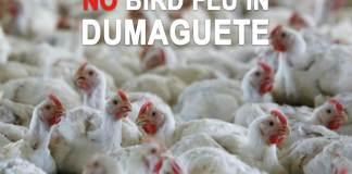 no bird flu in dumaguete