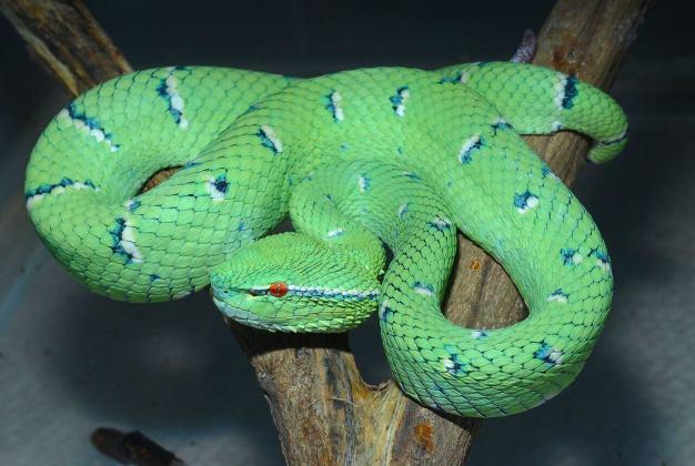 Illegal Live Reptile Trade