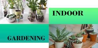 indoor gradening