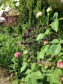 negy-evszak-kerteszet-siofok-bemutato-kert (25)
