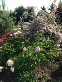 negy-evszak-kerteszet-siofok-bemutato-kert (28)