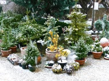 négy-évszak-kertészet-siófok-áruda- (11)