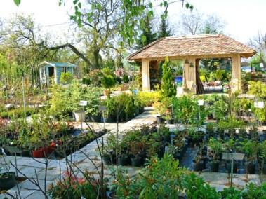 négy-évszak-kertészet-siófok-áruda- (14)