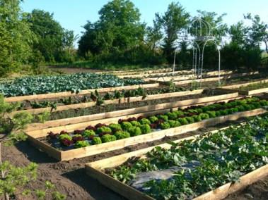 négy-évszak-kertészet-siófok-áruda- (24)