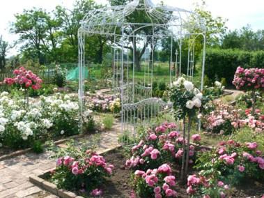 négy-évszak-kertészet-siófok-áruda- (29)