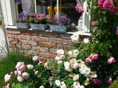 négy-évszak-kertészet-siófok-áruda- (40)