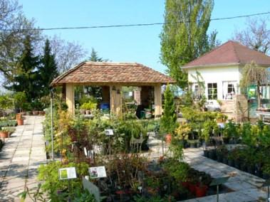 négy-évszak-kertészet-siófok-áruda- (43)