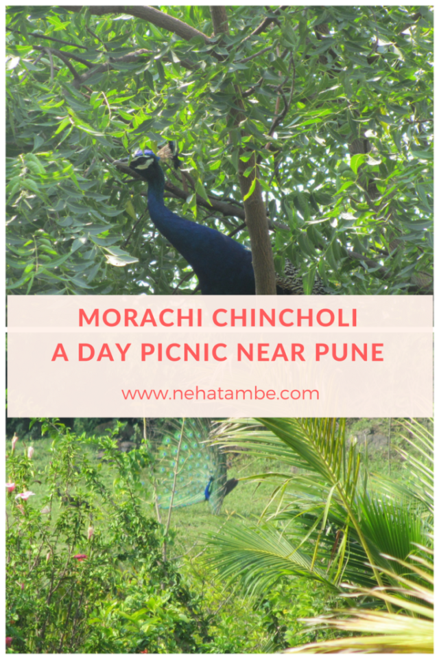 Agro-tourism at morachi chincholi near Pune