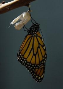 monarch-1518058_1920