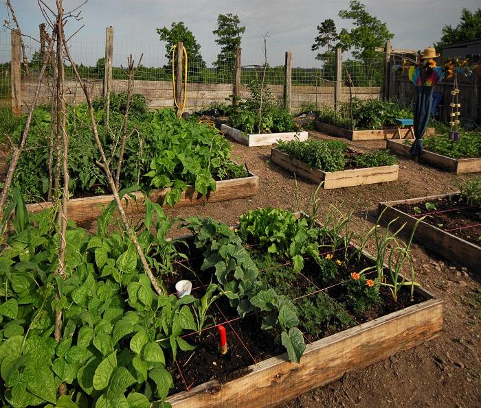 Neighborhood Gardening on Gardening  id=39324