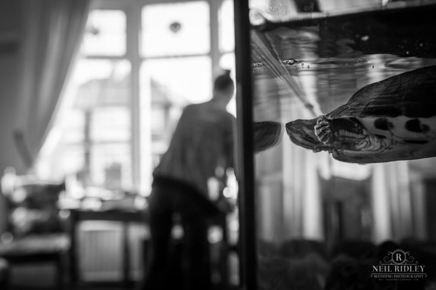 Turtle in a tank watching Bridal Prep