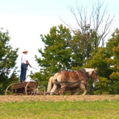 Amish farmer plows his field to make ready for plantings.