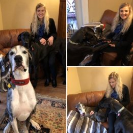 dietetic intern, great dane, rescue