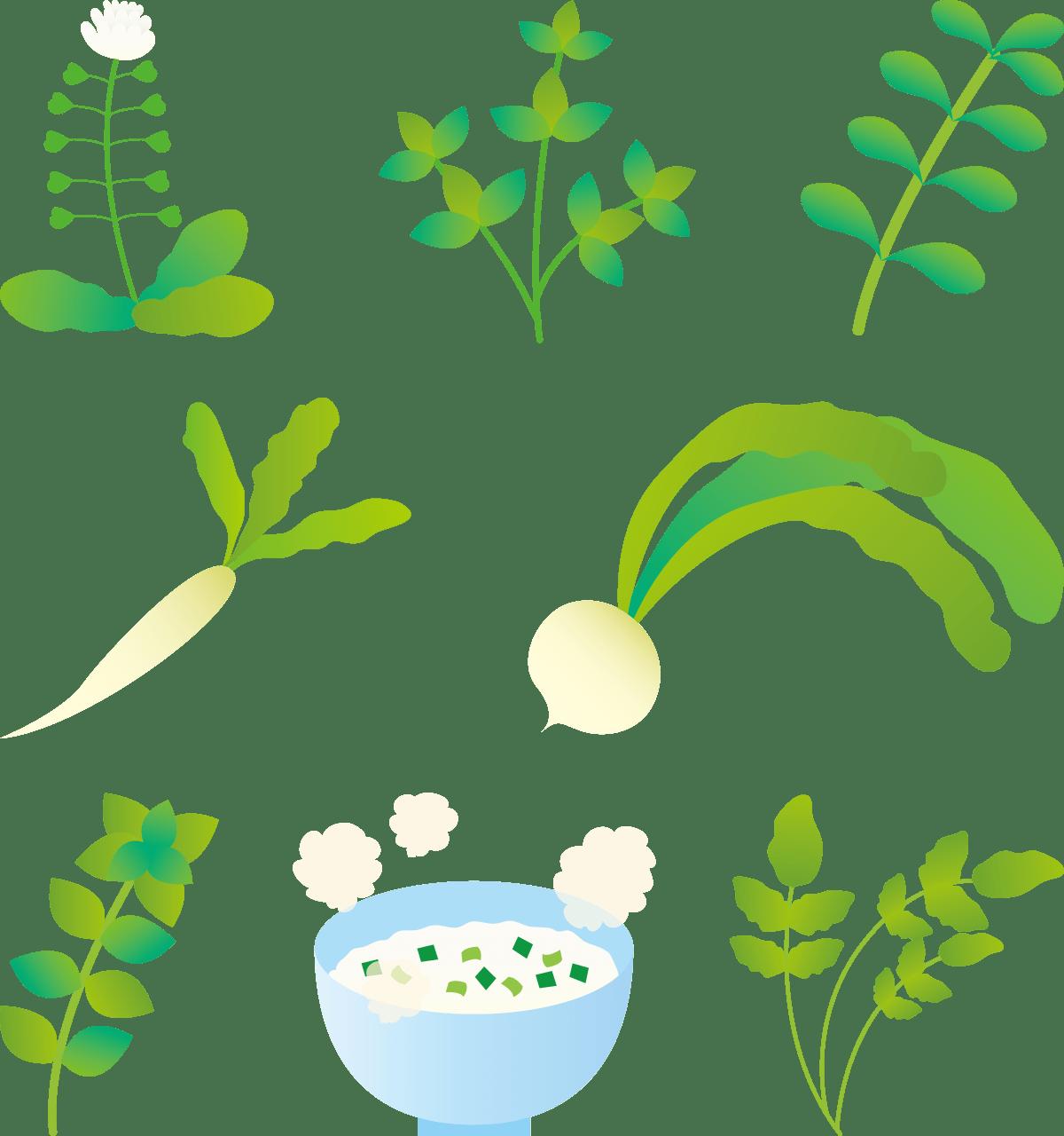 七草粥を食べる意味と由来は?効果効能がわかる七草囃子の歌の歌詞