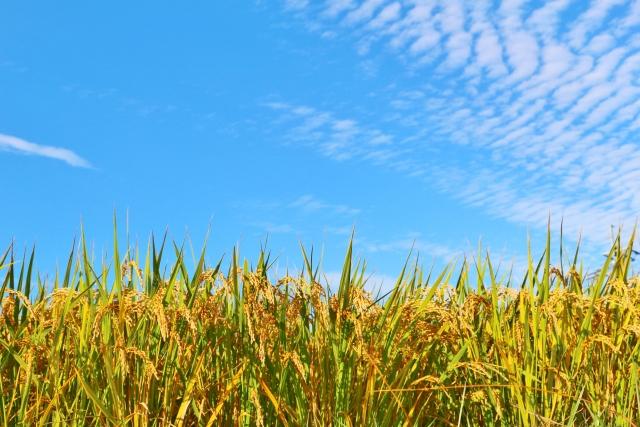 二百十日とは何の日?農家の厄日と呼ばれる理由と風祭り行事の意味