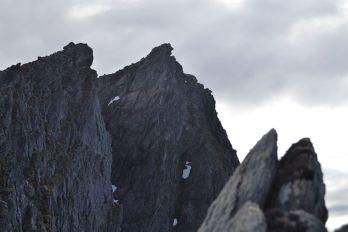 Ser du mannen i fjellet? Foto: Stine Lystad