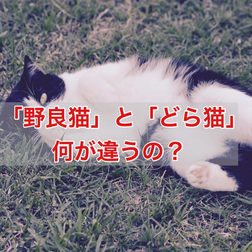 「野良猫」と「どら猫」って何が違うの?