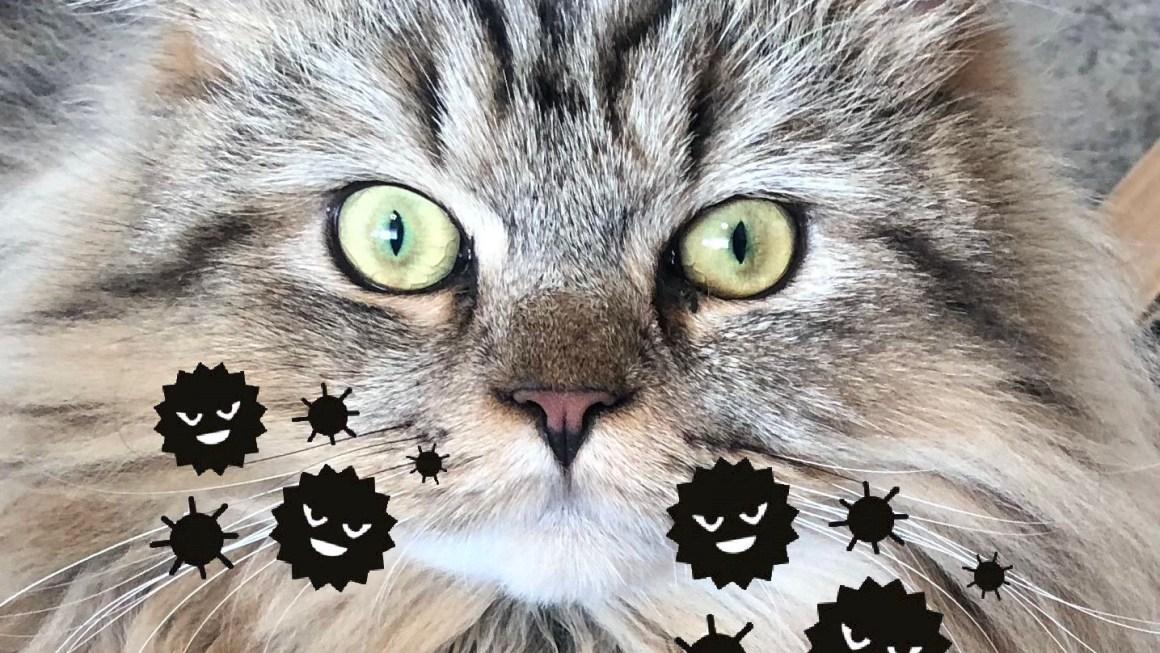 猫ニキビ ❶〜猫ニキビとは編〜