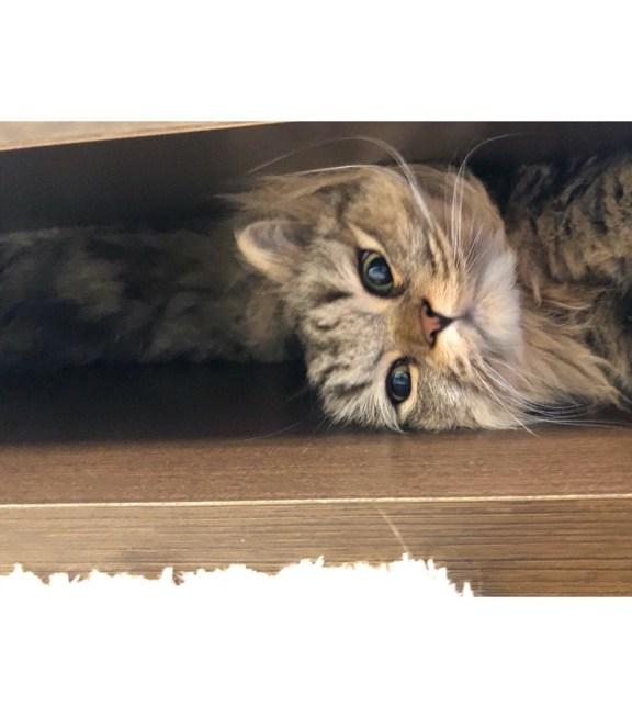 猫の腎臓病初期症状