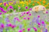 夢見る花壇