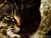 獣 -ケモノ- の目つき