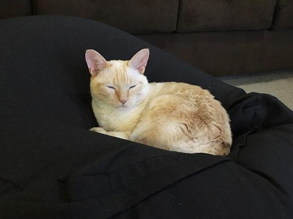 人をダメにするソファの上の猫