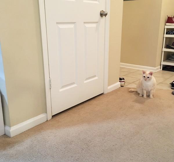 何かを察知する猫