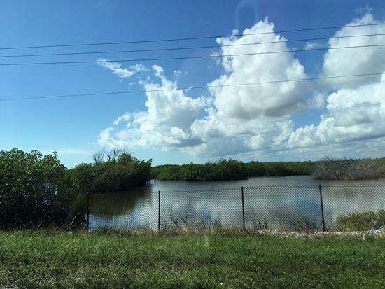 マイアミの湿原