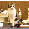 猫の年齢は人間なら何歳?計算方法と平均寿命は?