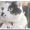 猫のおならの頻度や音やポーズは?臭いのは病気?