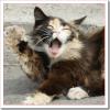 猫のあくびの意味は?臭いのは病気?