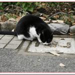 猫の餌の量や時間は?食べない場合の対処法は?