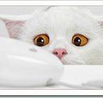 猫が水道水を飲まないけど安全?ミネラルウォーターが危険な理由は?