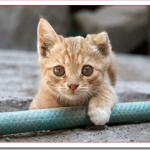 猫の里親になる方法や手順は?譲渡条件や手続きと準備は?