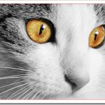 猫のお風呂の入れ方や乾かし方のコツは?頻度や温度や時間は?