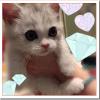 指原莉乃の猫ミヌエット五郎の値段や性別や種類は?かわいい画像