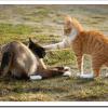 猫がしっぽや後ろ足を噛まれて怪我した場合の応急処置の方法や治療は?