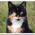 猫の癌末期の病状や治療法は?痛み止めや手術の是非と余命は?