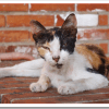 野良猫駆除は保健所と動物愛護団体の対立がある?捕獲業者は?