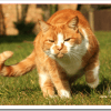 猫の肥満チェック方法とダイエット法は?食事対策や運動療法は?
