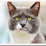 猫の口が臭い場合の対処法は?口臭の原因と予防法は?