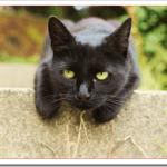 野良猫駆除の方法は?毒餌や不凍液と殺処分の実態は?