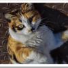 【初心者】飼いやすい猫の種類は?性格、しつけ、毛、鳴き声など選び方は?